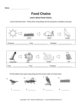Worksheet Food Webs For Kindergarten Students food chains instant worksheets