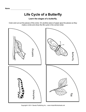 Worksheets Butterfly Life Cycle Worksheet life cycle butterfly instant worksheets