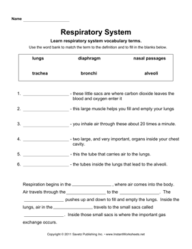 Worksheet Respiratory System Worksheets respiratory system instant worksheets